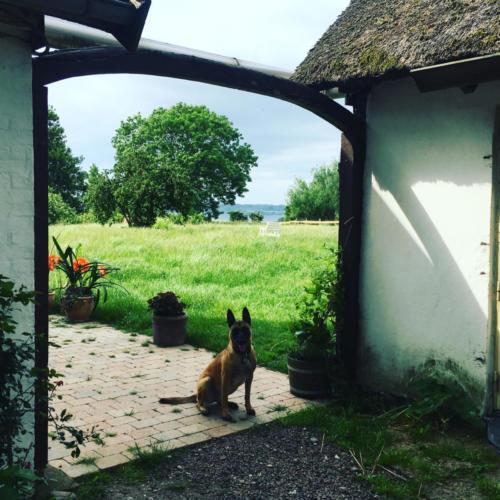 Yoga retreat animals