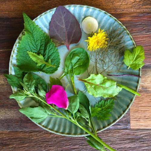 Yoga retreat ukrudt salat